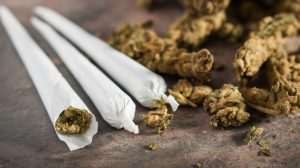 Risks Of Early Marijuana Use By The Young